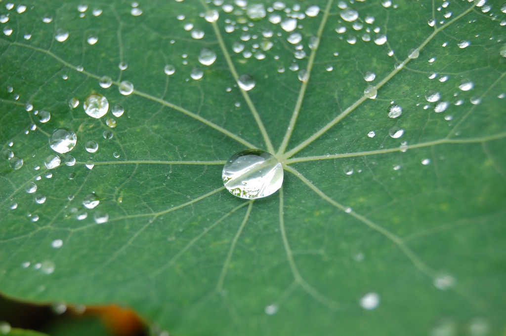 Nature and Nanotech
